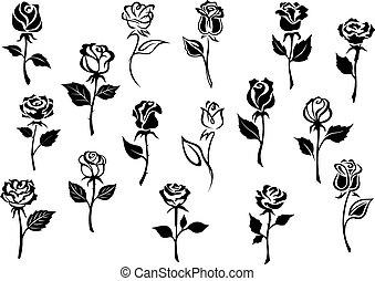 rosas, flores blancas, negro