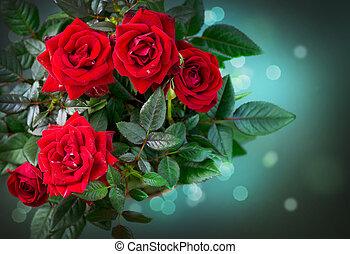 rosas, flowers., rosa