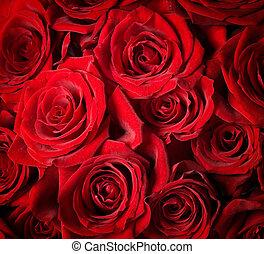 rosas, foco selectivo, rojo, fondo.