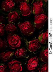 rosas, fondo., negro, key., rojo, bajo