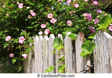 rosas, jardim, cerca
