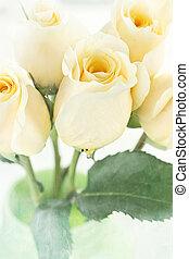 rosas, longo, amarela, caule
