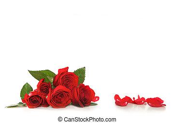 rosas, pétalas, rosa branca
