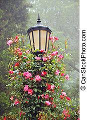 rosas, postede farol