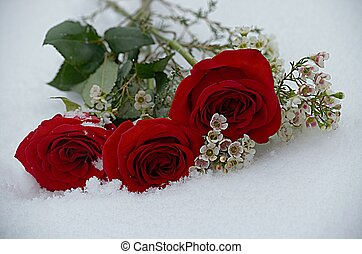 rosas, queda, neve