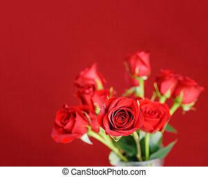 rosas rojas, en, un, fondo rojo