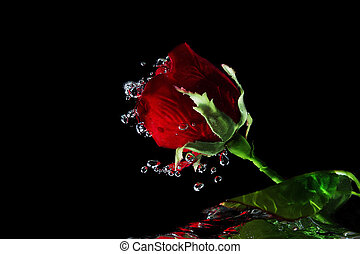 rosas, rojo,  Valentine