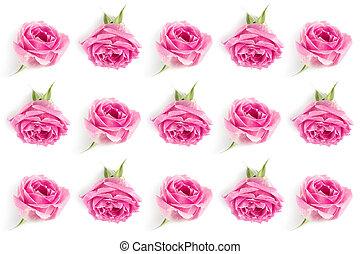 rosas rosa, plano de fondo