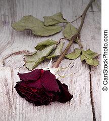 rosas, secado, descolorido