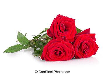 rosas, três, vermelho