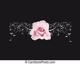 rosas, valentine