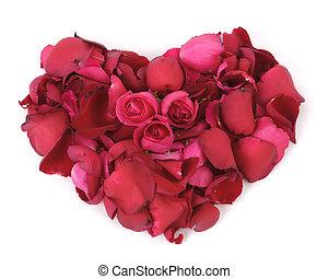 rosas, vermelho, pétalas