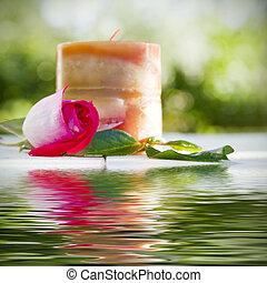 rose, à, reflet