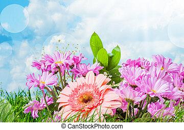 rose, été, fleurs