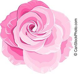 rose., 赤