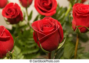 rose, 08, fleurs