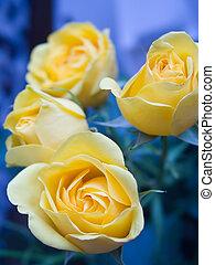 rose, 3