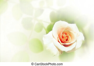 rose - abstract scene with flower as floral background