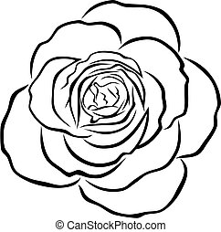 Abstract vector illustration of rose