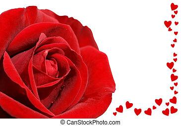 rose, amour, noir rouge