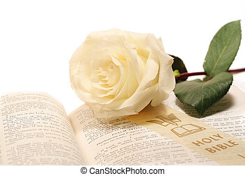 Creamy white rose on very old bible
