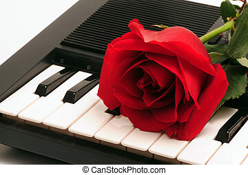 Rose and key board