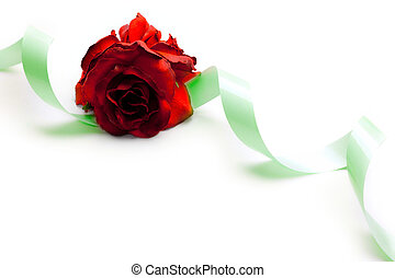 Rose and ribbon isolated on white