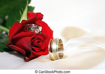 rose, anneaux, mariage