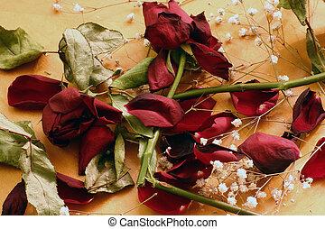 rose, appassito