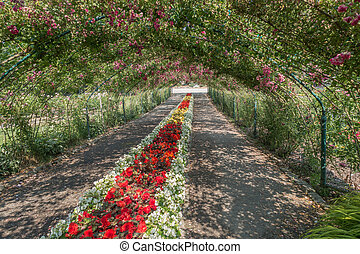 Rose Arbor At Point Defiance 3 - A arbor of Roses covers a...