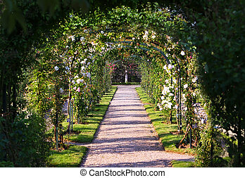 Rose Arch In the Garden
