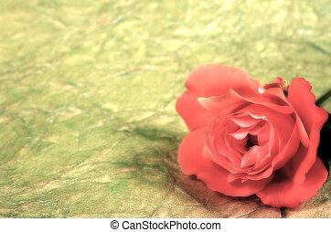 Rose Backbround