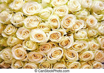 Rose background - Background of many white roses in wedding ...