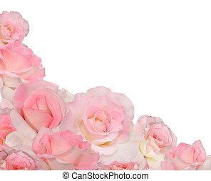 rose background - The collage consisting of several pink...