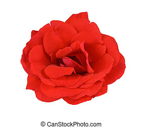 rose, blanc rouge