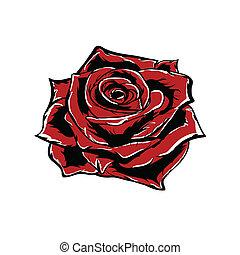 rose, blanc, vecteur, isolé, rouges