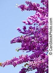 rose, bleu, branches, sky., lumière soleil, matin, contre, fleurs fraîches