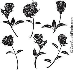 rose, blomst