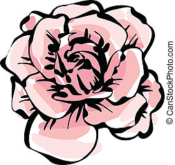 rose, blume, delikat