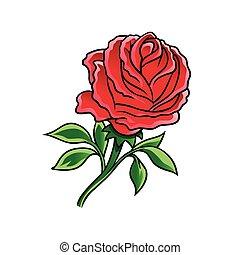 rose, blume, rotes
