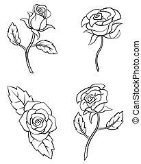 rose, blume, satz, sammlung