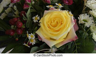 Rose, Blumen - rose, blumen