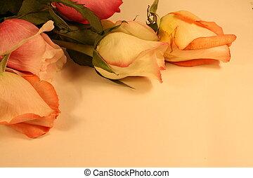 rose, bordo