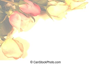 rose, bordo, glorioso, sbiadito