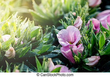 rose, bouquet, fleurs, lisianthus, matin