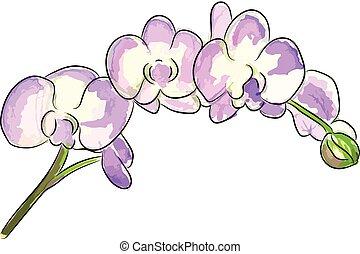 rose, bouquet, illustration, aquarelle, flowers., vecteur, orchidée