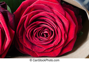 Rose Bouquet Macro - Close up (macro) of a fully bloomed red...