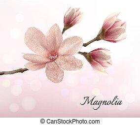 rose, branche, magnolia, deux, flowers., vector.