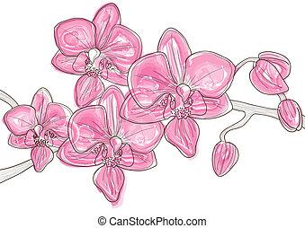 rose, brindille, orchidée