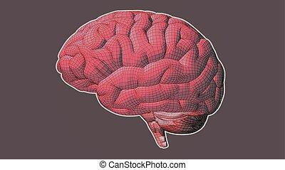 rose, brun, bg, wireframe, cerveau, vue côté